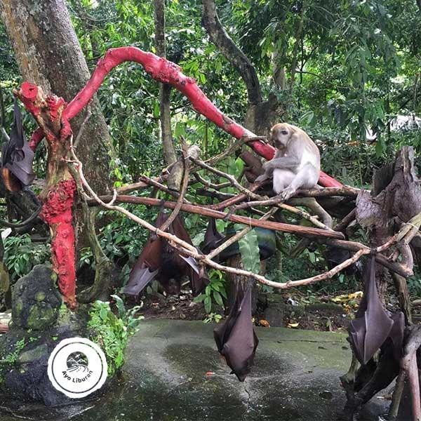 Alas-Kedaton-Monkey-Forest