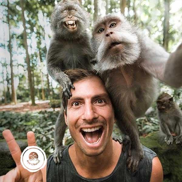 Monkey-Selfie-Ubud-Monkey-Forest